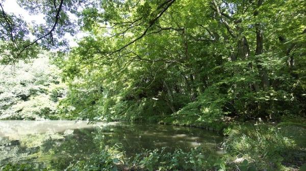 森の池には鯉もいます