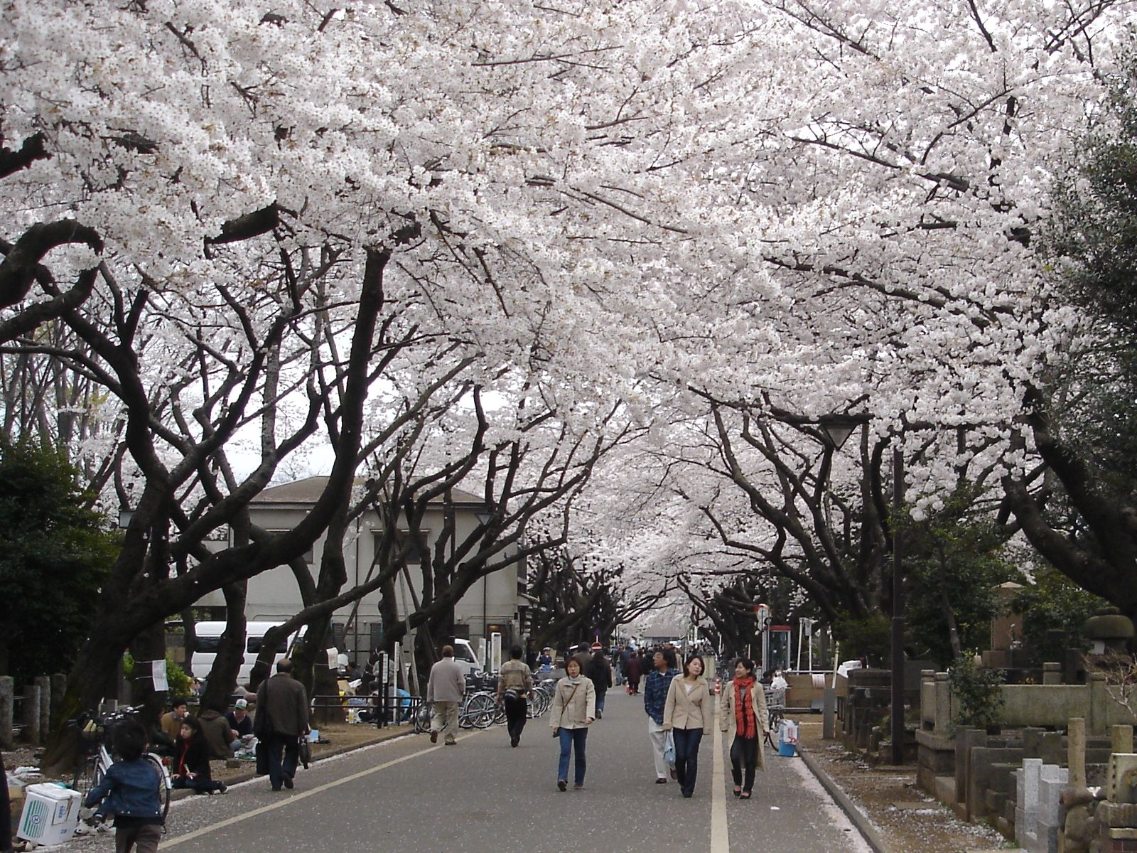 Yanaka_cemetery