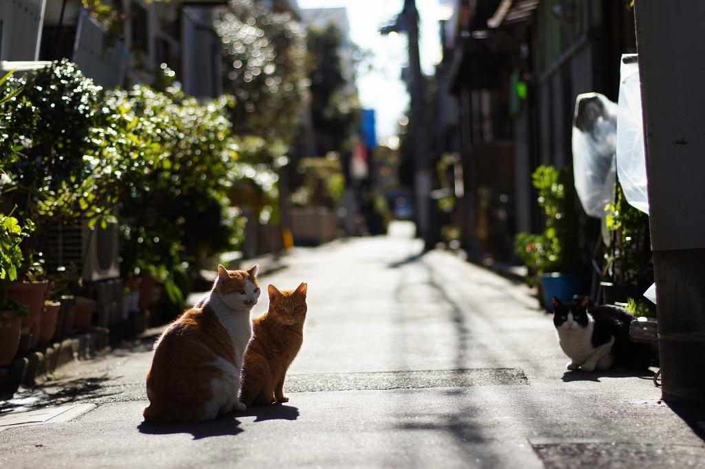 谷根千 猫