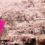 【特集!】パークコート赤坂檜町ザ・タワーが凄まじすぎる!