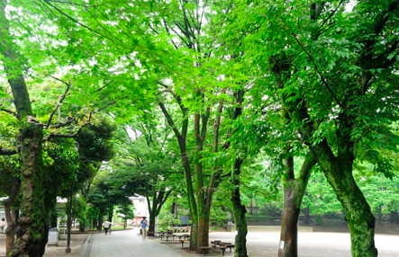 治安の良い街、文京区!分譲マンションのランキングと相場を大公開!