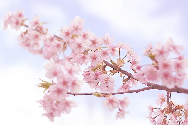 名曲「桜坂」は実在する坂!周辺の住環境は?