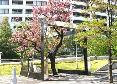 SGC_CG7_木のフォリ―島津山の桜