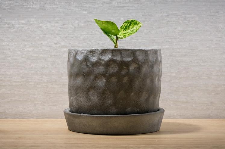 観葉植物の購入注意点から育て方まで大特集!おすすめの観葉植物13選も紹介