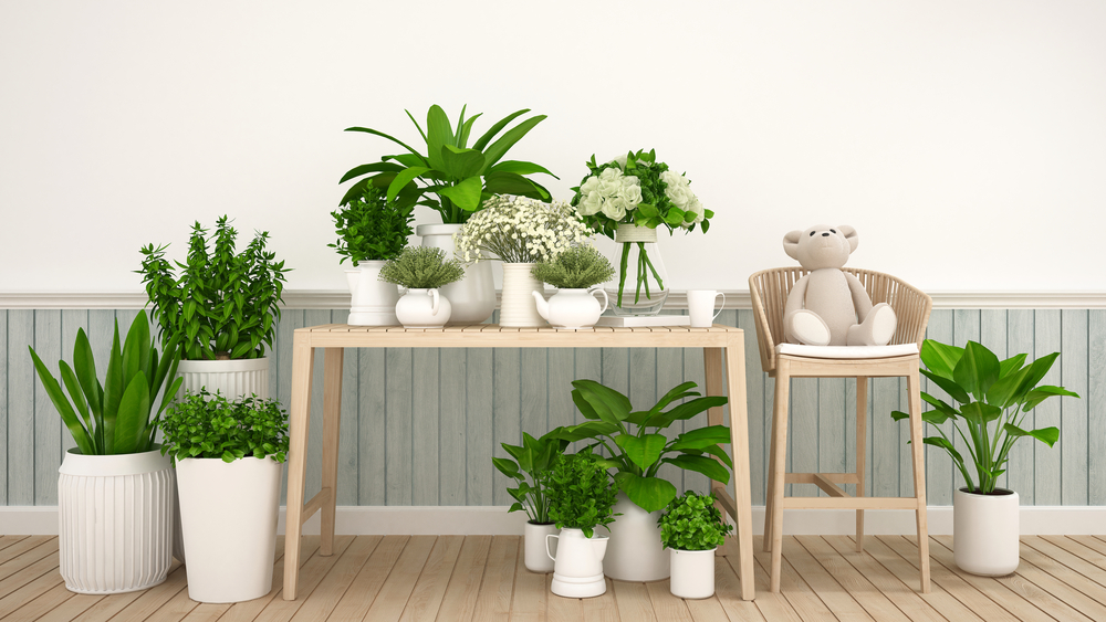 観葉植物でお部屋に潤いを!枯らさないための5つのコツとは