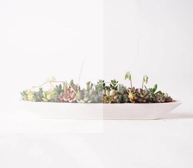 多肉植物の寄せ植えにピッタリな器