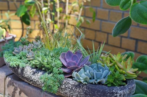 多肉植物の寄せ植えって実は超簡単!誰でもできる寄せ植えの方法や寄せ植え先の鉢も一挙紹介!