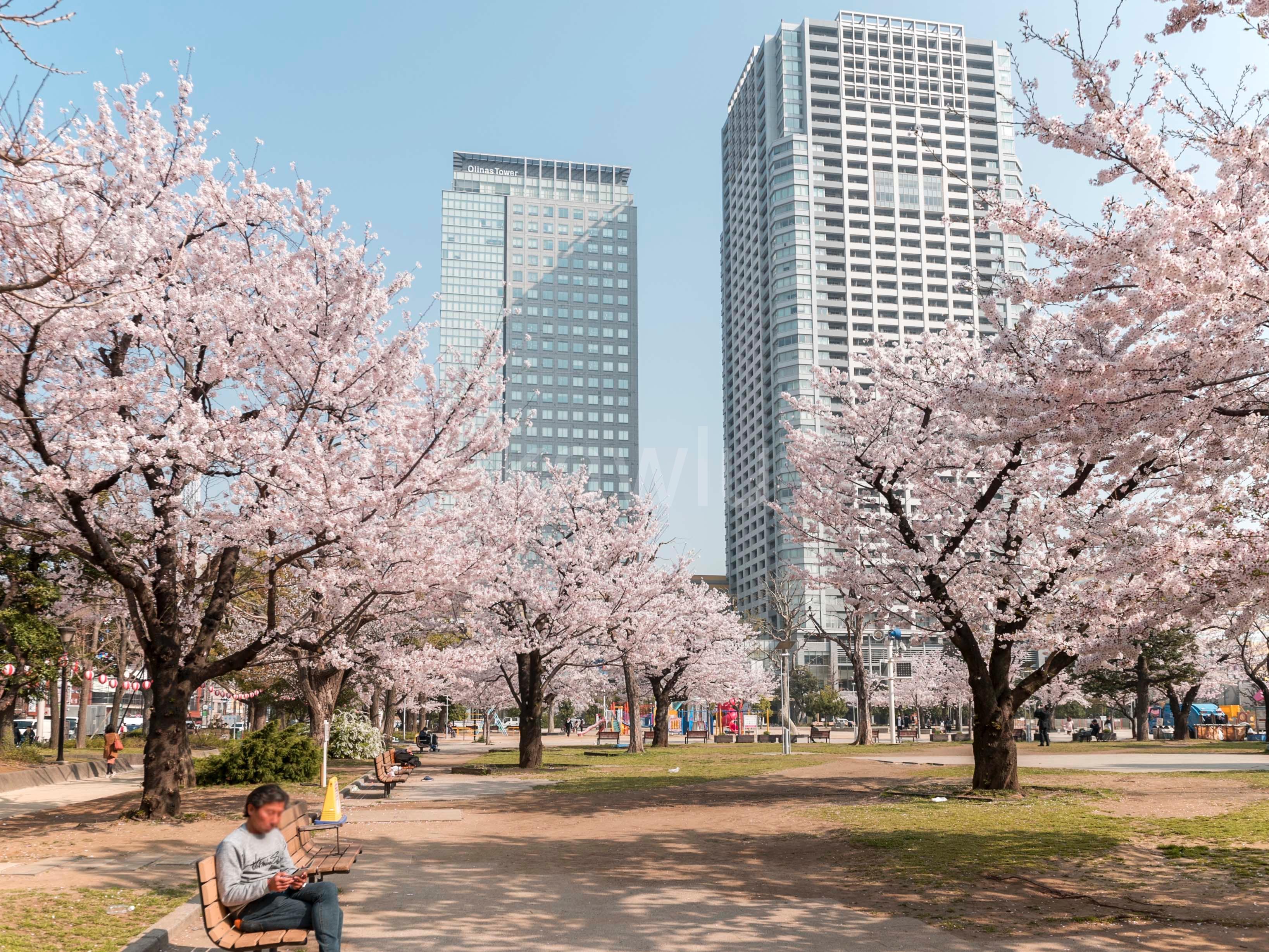 ブリリアタワー東京_錦糸公園